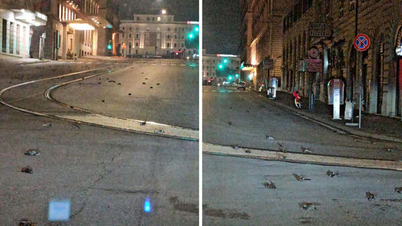 Privelişte oribilă la Roma, după noaptea de Revelion. Mii de păsări au murit din cauza focurilor de artificii VIDEO