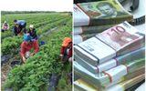 Câţi bani trimit acasă românii care lucrează în străinătate. Valoarea sumelor trimise în ţară, 3% din PIB-ul României