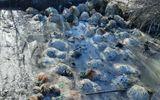 Ciobanul oilor înecate și înghețate într-un pârâu a fost găsit şi dus la audieri