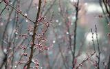 PROGNOZA METEO 25 FEBRUARIE. Vremea continuă să se încalzească. Temperaturi de 19 grade