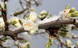 PROGNOZA METEO 15 APRILIE. Românii se vor bucura de vreme caldă în weekend, până atunci temperaturi scăzute