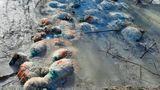 Scene de groază în Olt. Zeci de oi, moarte și înghețate, descoperite într-un pârâu. Ciobanul e căutat de scafandri!