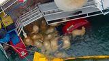Percheziții de amploare în cazul oilor de pe nava scufundată la Midia: E DEZASTRU ecologic!