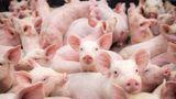 Când începe recensământul agricol din România. Cei care nu spun câte animale au riscă amenzi usturătoare