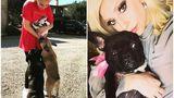 Buldogii lui Lady Gaga au fost furaţi, iar persoana însărcinată cu plimbatul acestora, împuşcată în piept în plină stradă