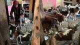 Imagini ÎNFIORĂTOARE din casa unei femei din Suceava. Trăia alături de 14 câini, trei pisici și cadavre de animale