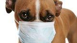Zeci de câini cu anticorpi Covid-19, descoperiți în Washington. Explicația oamenilor de știință