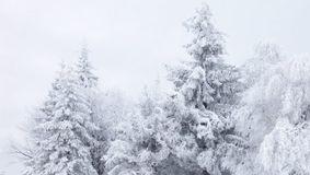 VINE IARNA în România! O vreme cumplită lovește întreaga țară. Alertă meteo ANM