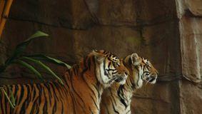 La Zoo intră doar cei vaccinați. Este cea mai nouă măsură luată înaintea valului 4