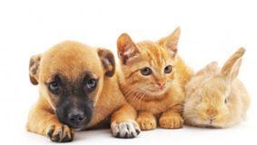 Fă testul animalului de companie și află lucruri despre tine!