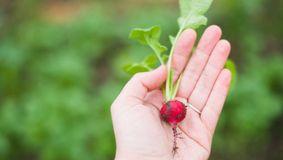 Cum să crești legume – legume de cultivat pentru începători