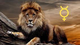 Leul în luna mai. Ce se întâmplă cu acest nativ următoarele săptămâni