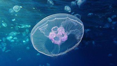 Tânăr mort după ce a fost înţepat de o meduză. El a fost deconectat de la aparate după o săptămână de comă