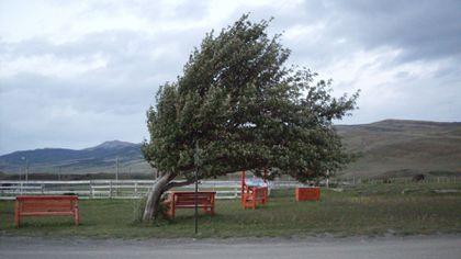 Cod GALBEN de vânt în mai multe județe din România