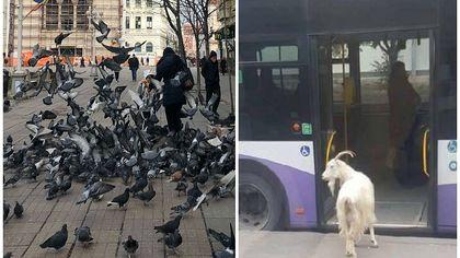 Proiect controversat al USR PLUS la Timișoara: Amenzi pentru hrănirea câinilor, a porumbeilor și a altor animale, pe stradă!
